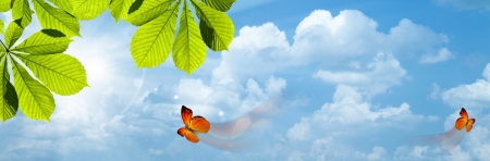 Butterfly. Blue skies with bright sun as abstract backgrounds photo