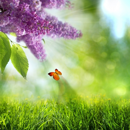 abstract summer backgrounds with lilacs flowers and butterfly photo