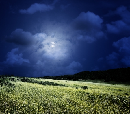night moon: midnight on the meadow, abstract natural backgrounds