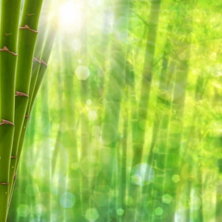 bamboo therapy: Bamboo forest. Abstract summer backgrounds with bright sun and beauty bokeh Stock Photo