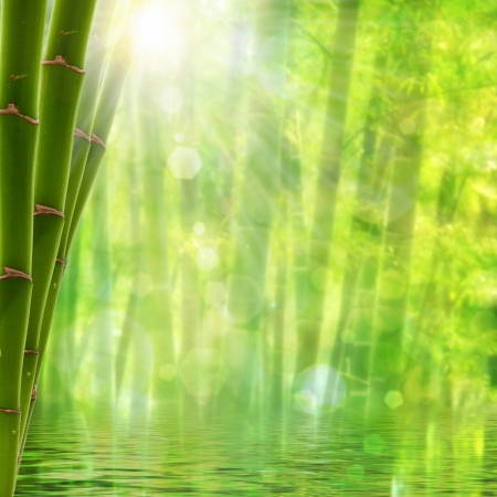 Bamboo forest. Abstract summer backgrounds with bright sun and beauty bokeh photo