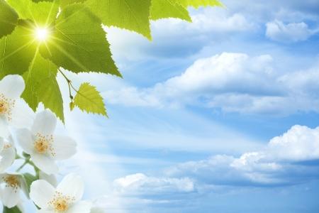 tree jasmine: Jasmine. Abstract natural backgrounds against blue skies
