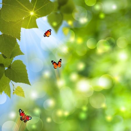 抽象的夏日背景与阳光和蝴蝶