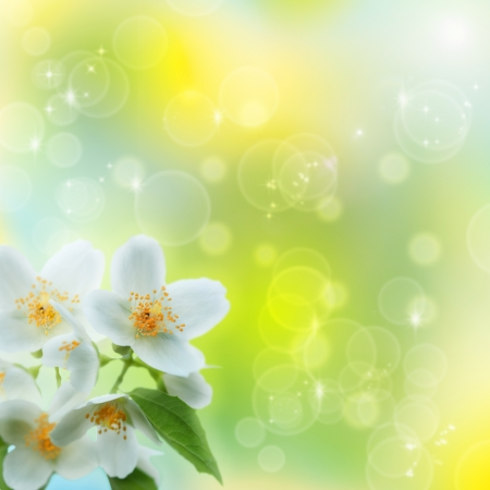 tree jasmine: Jasmin flower as abstract natural backgrounds Stock Photo
