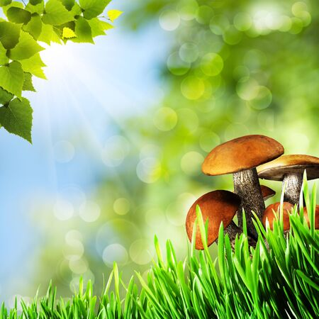 Abstract natural backgrounds with beauty mushrooms photo