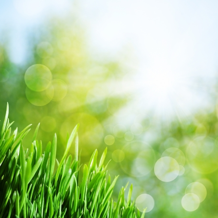 Abstract natural backgrounds with green grass and sunbeam
