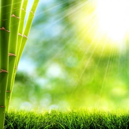 bambu: Brillante ma�ana de verano la luz en el bosque de bamb�