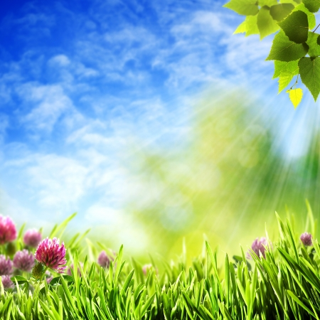 Abstract natural backgrounds under the blue skies Stock Photo - 14149597