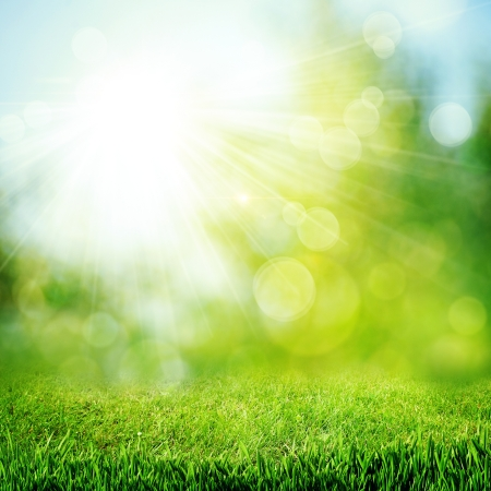 spring: Under the bright sun  Abstract natural backgrounds Stock Photo
