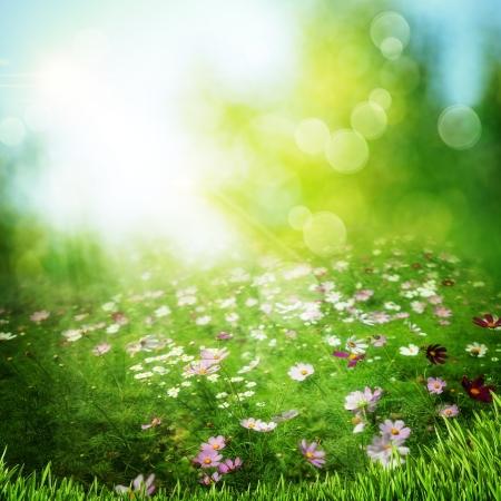 아침: 안개 낀 이른 아침에 초원. 추상 자연 배경 스톡 사진