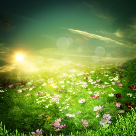 early summer: Sunrise on the meadow. Natural abstract backgrounds