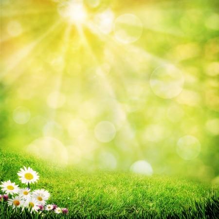 안개 낀 초원에 카모마일 꽃, 추상 자연 배경