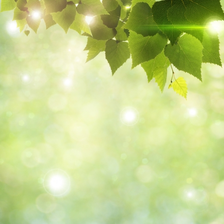 Sunlight through foliage, abstract natural backgrounds photo