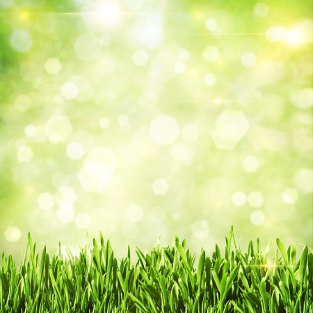 blurred background: Green grass. Abstract natural backgrounds