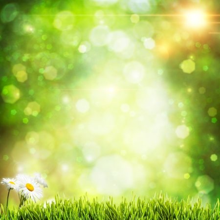 Abstract natural backgrounds with beauty bokeh and daisy flowers photo
