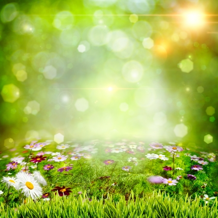 Abstract natural backgrounds with chamomile flowers photo