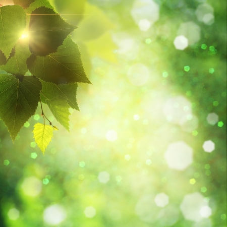 Foliage. Abstract natural backgrounds with lens flare and beauty bikeh Stock Photo - 14373641