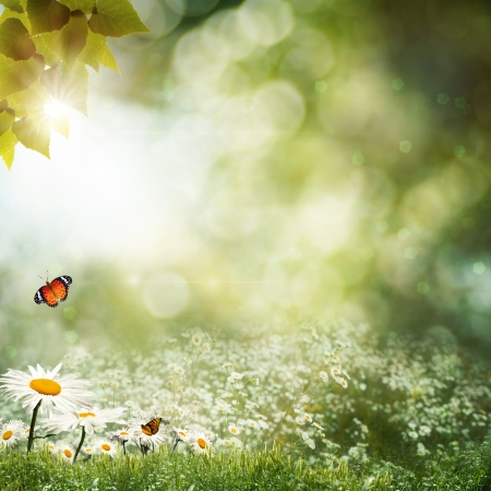 Abstract natural backgrounds with beauty bokeh photo