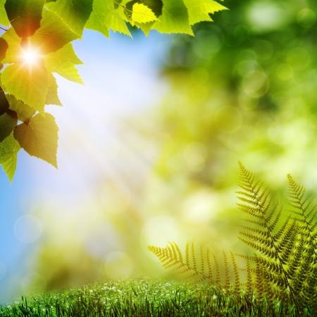 숲. 고사리 단풍 자연 배경