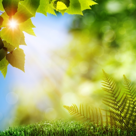 yeşillik: Ormanda. Eğrelti yaprakları ile doğal arka Stok Fotoğraf