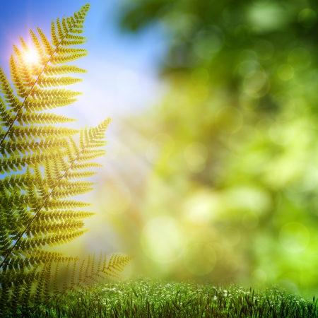 fern: Fern. Abstract natural backgrounds with beauty bokeh