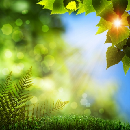 Summer natural backgrounds with beauty bokeh Stock Photo - 14835767