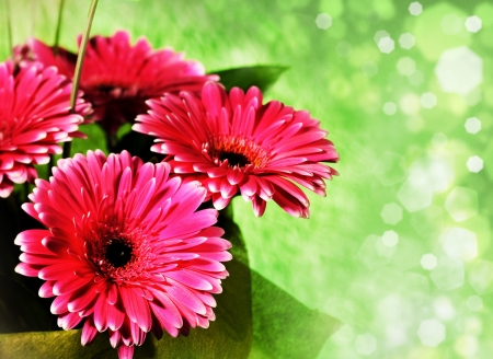 pink gerber flowers over abstract green backgrounds with bokeh photo
