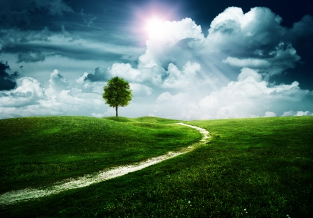 solitary tree: Straight way to the happy future. Abstract natural backgrounds Stock Photo