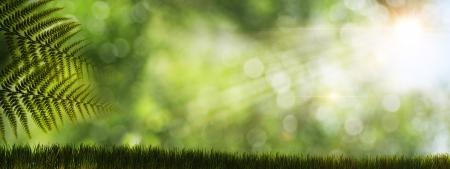 боке: Абстрактные фоны с природными папоротника и солнечных лучей Фото со стока