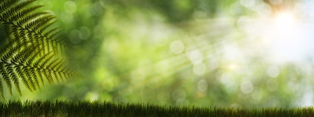 bokeh: Abstract natural backgrounds with fern and sun rays Stock Photo