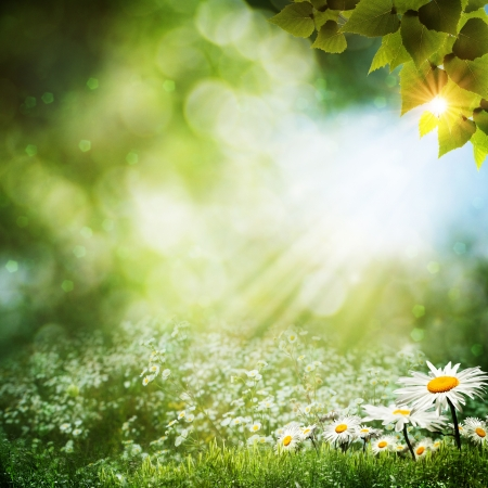 Abstract summer backgrounds with daisy flowers Stock Photo