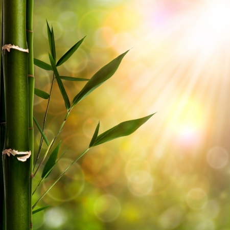 wellness background: Abstract oriental backgrounds with bamboo foliage