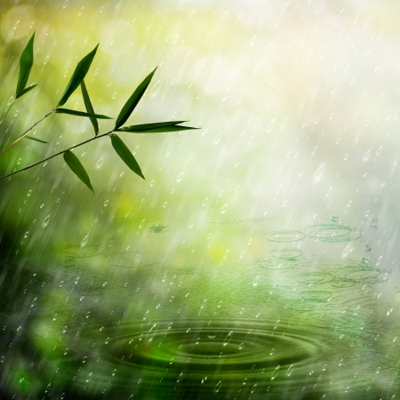 Misty rain in the bamboo forest. Abstract natural backgrounds photo