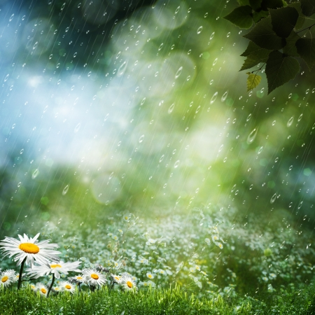 Daisy flowers under the sweet rain, natural backgrounds Stock Photo - 15226938