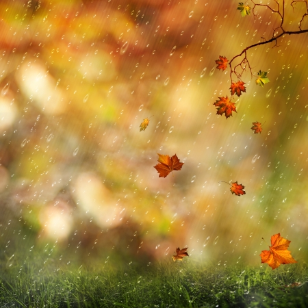 Sweet autumn rain on the meadow, abstract natural backgrounds photo