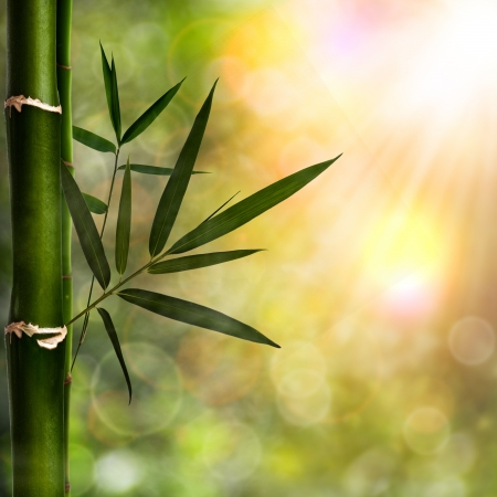 Abstract natural backgrounds with bamboo foliage photo
