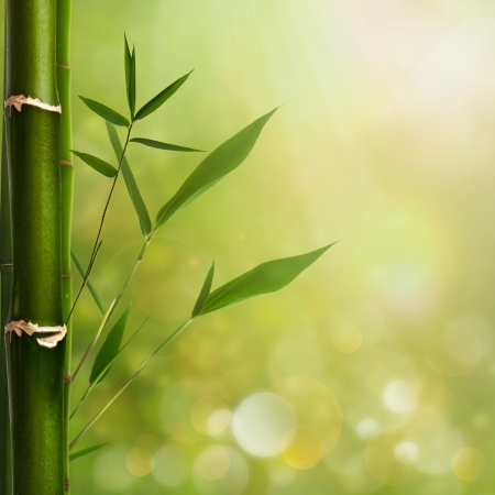Natural zen backgrounds with bamboo leaves photo