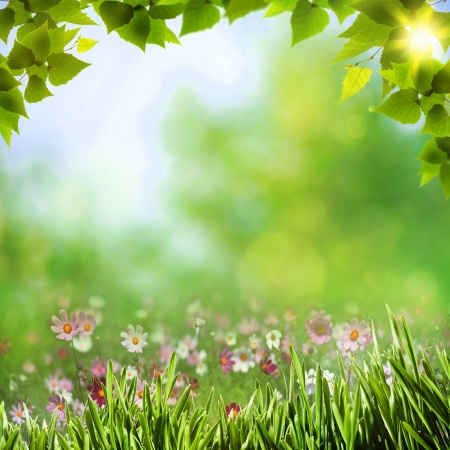 Abstract natural backgrounds with beauty bokeh Stock Photo - 16025874