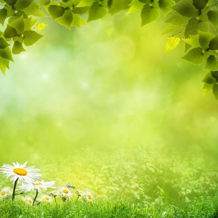 spring leaf: Beauty natural backgrounds for your design