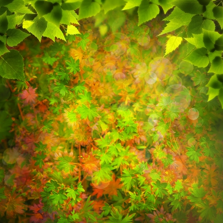 viewfinderchallenge3: Beauty Nature. Abstract natural backgrounds for your design
