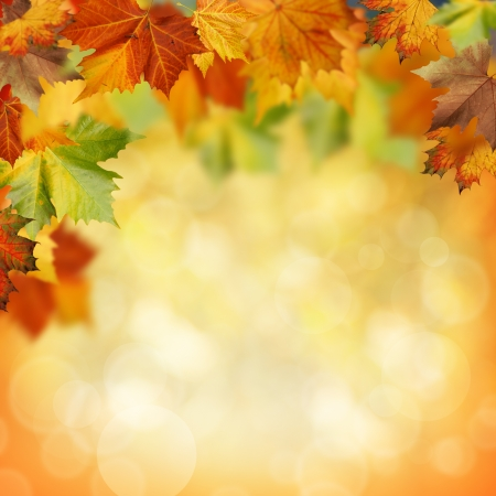 changing colors: Natural beauty. Autumnal abstract backgrounds for your design