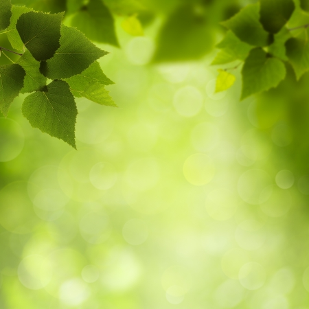 leafage: Natural Beauty. Abstract eco backgrounds for your design