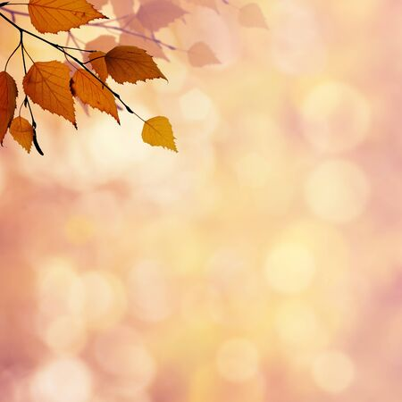 Abstract autumnal backgrounds with beauty bokeh for your design photo