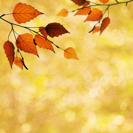 Abstract autumnal backgrounds with beauty bokeh Stock Photo - 16801183