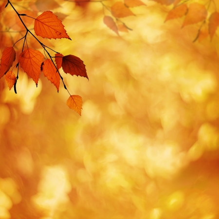 Abstract autumnal backgrounds with petzval lens bokeh photo