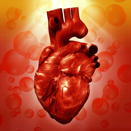 pulsating: Human Heart. Abstract medical backgrounds for your design Stock Photo