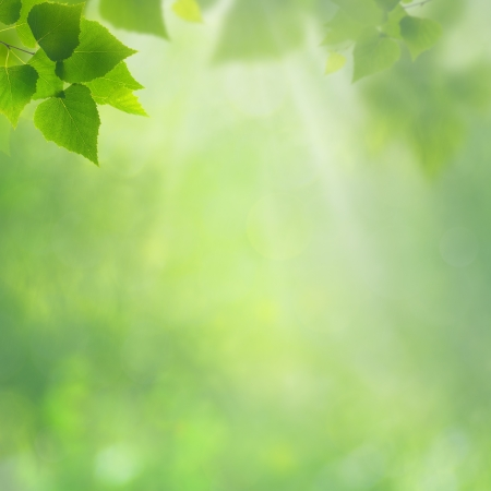 Summer natural backgrounds for your design photo