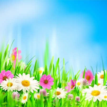 Beauty summer backgrounds for your design photo