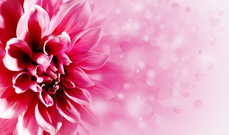 Beautiful lotus flower backgrounds for your design photo