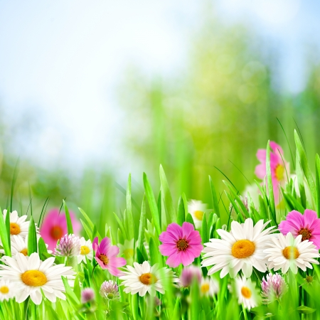 flowers horizontal: Beauty meadow. Abstract natural backgrounds for your design